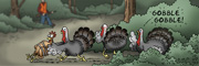 Description: Turkeys pushing a tied up chicken out from behind a bush while shouting 'gobble gobble'. Hunter in background.. Caption: GOBBLE GOBBLE!